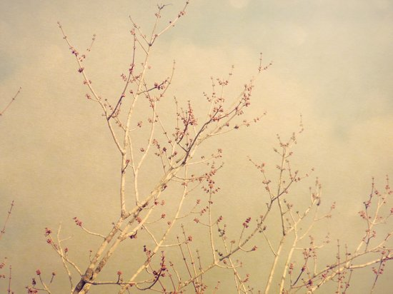 Vintage February Branches Art Print