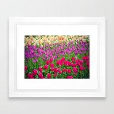 Fields of Color I, Woodburn Tulip Festival Framed Art Print