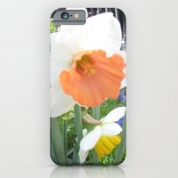 iPhone & iPod Case featuring Daffodil by AuFish92024