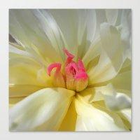 peony bloom II Canvas Print