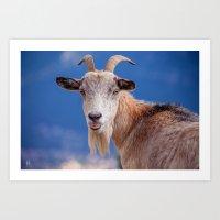 Goat - tongue out 8078 Art Print