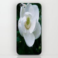 Magnolia Flower iPhone & iPod Skin