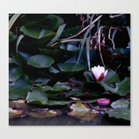 apple in the pond Canvas Print