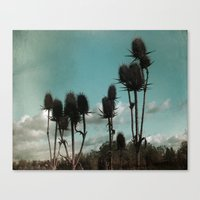 Prickly Teasels  Canvas Print