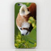 Red Panda 1 iPhone & iPod Skin
