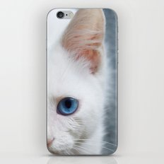 Turkısh Van Cat iPhone & iPod Skin