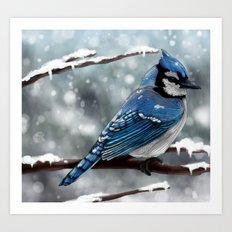 Blue Jay Art Print
