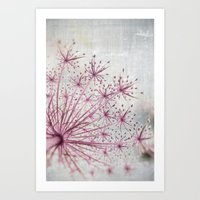 Vintage Raspberry Pink and Paris Gray Botanical Queen Anne's Lace Wildflower Art Print