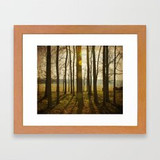 Afternoon Sunlight with Lens Flare Framed Art Print
