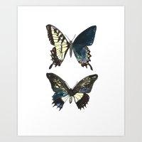 Gynandromorph No.1 Natur… Art Print