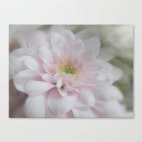 Pale Pink Petals Canvas Print