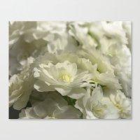 Pale Bridal Veil Canvas Print