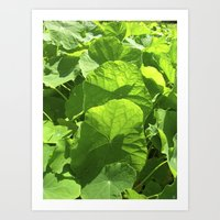 Green Nasturtium Leafs I… Art Print
