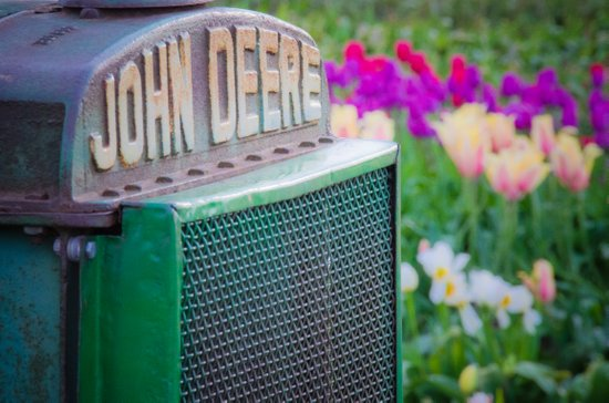 John Deere in the Tulips Art Print