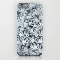 Queen Anne's Lace Flower… iPhone 6 Slim Case