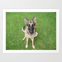 A German Shepherd smile Art Print