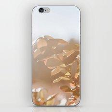 autumn on plantation iPhone & iPod Skin
