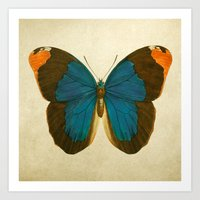 Lepidoptera # 1 Art Print