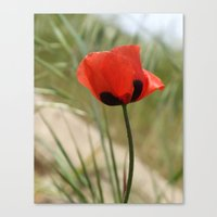 Wild Poppy Canvas Print