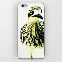 Curlew Bird iPhone & iPod Skin