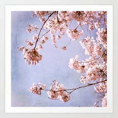 blossoms and spring sky Art Print