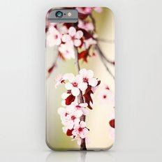 Pink Cherry Blossoms iPhone 6 Slim Case