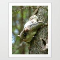 flying squirrel 2016 III Art Print