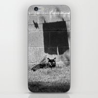 The Cat And The Pants iPhone & iPod Skin