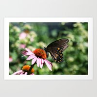 Eastern Tiger Swallowtail - Black Morph Art Print