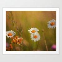 Wild Daisies I Art Print
