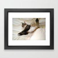 Cat Dreaming Framed Art Print