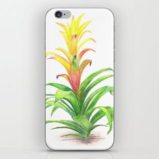 Bromeliad - Tropical plant iPhone & iPod Skin