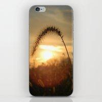 Field Grass Sunrise iPhone & iPod Skin
