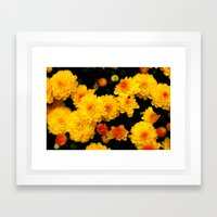 Golden Dew Drops. Framed Art Print