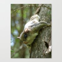 flying squirrel 2016 III Canvas Print