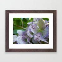Fairy's Bed Framed Art Print