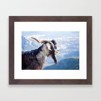 Longhair Goat 7737 Framed Art Print