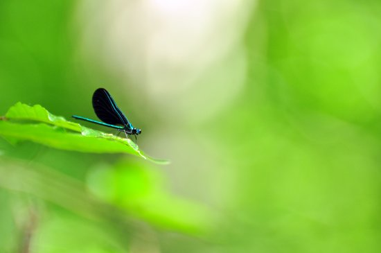 Blue Damsel and the Lime Green Sky Art Print