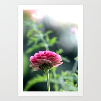 low angle pink flower  Art Print