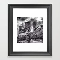 Central Park Tree. Framed Art Print