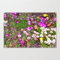 Mesembryanthemum Canvas Print