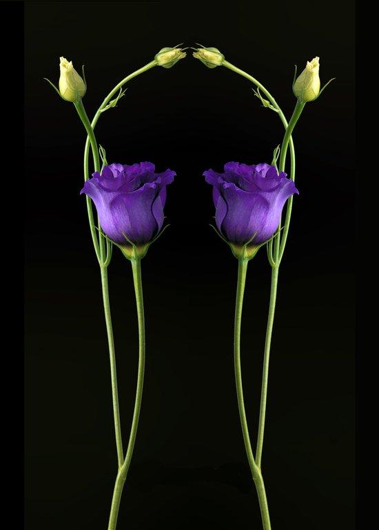 Reflection in Purple Art Print