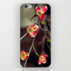pinkdog iPhone & iPod Skin