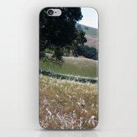 California Live Oak iPhone & iPod Skin