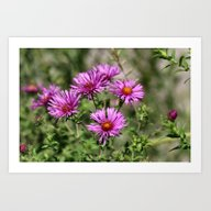 Art Print featuring Wild Asters by Kealaphotography
