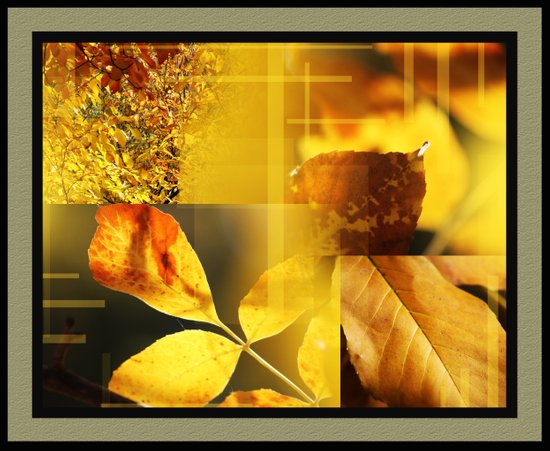 Yellow Leaves 2 Art Print