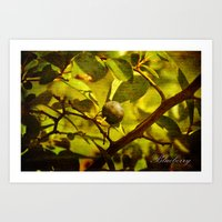 In the Garden - Blueberry Art Print