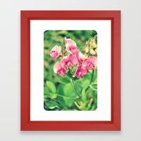 sweet pea Framed Art Print