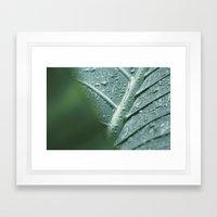 Elephant Ear Leaf still life Framed Art Print