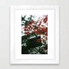 Red Maple Framed Art Print